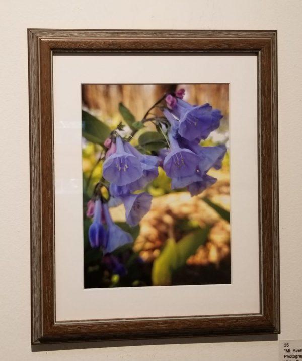 Mt. Aventine Bluebells - Fine Art Photography